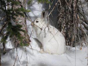 George took this while snow shoeing at Brainard Lake.